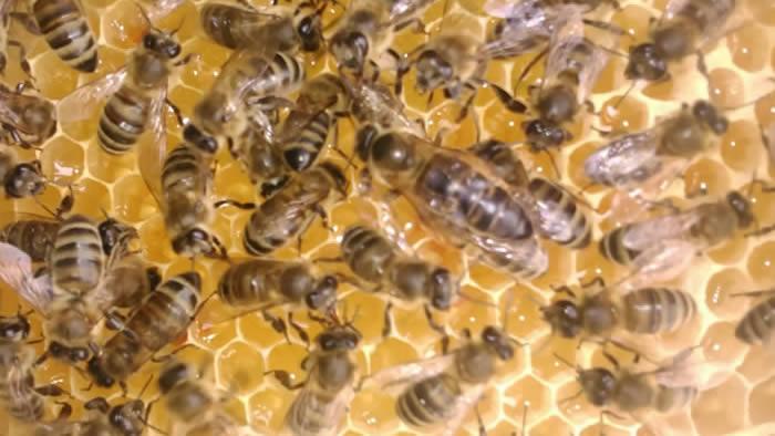 1000 Bee Web Links  Bad Beekeeping Blog  Bees and